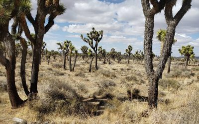 Spring Break 2021 – Part 4: Joshua Tree